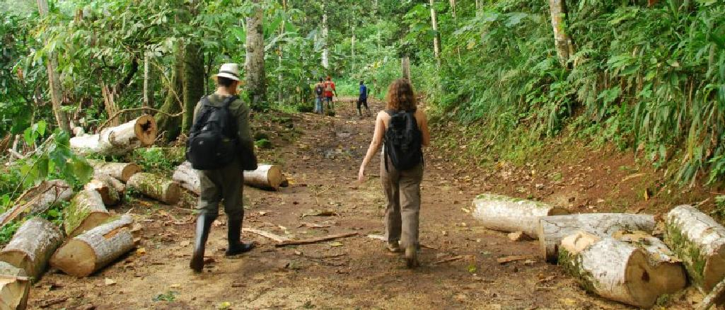 Sample Collection in Sao Tome and Principe